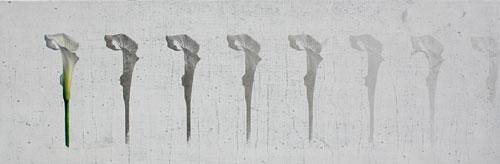 flor-no16