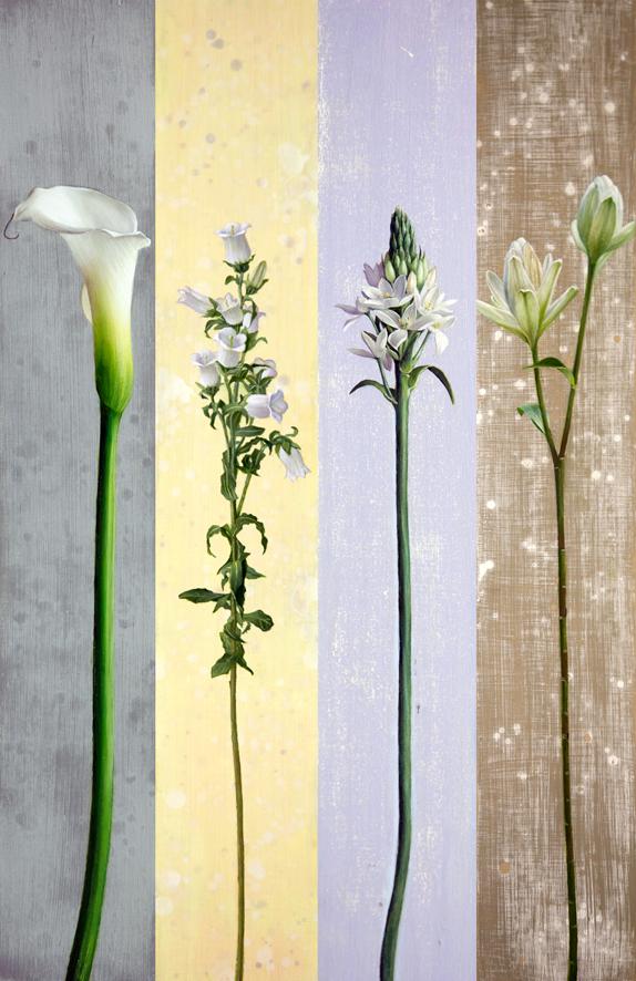flowers-hp
