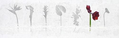 flor-no15