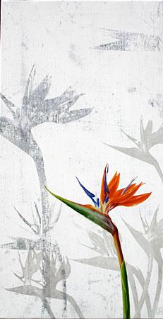flor-no29
