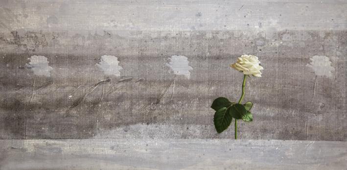 LessisMoreflower2-1015hp